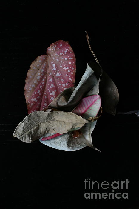 Old Leaves Photograph - Old Leaves. by Tanya Polevaya