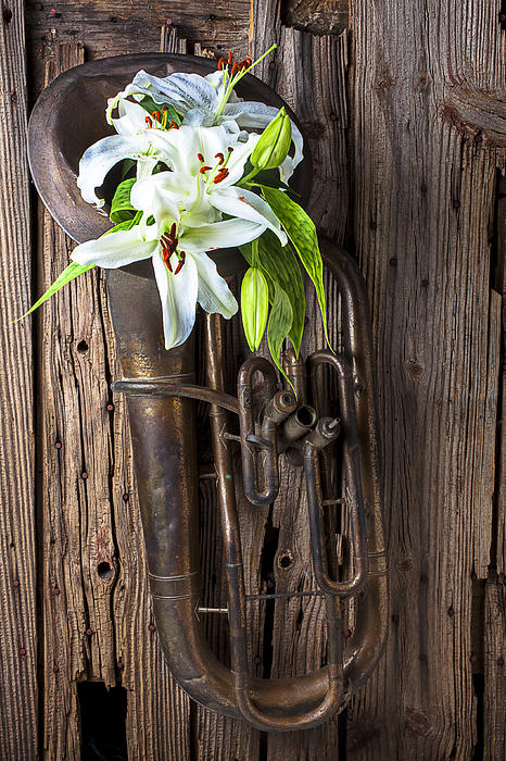 Old Tuba Photograph - Old Tuba And White Lilies by Garry Gay