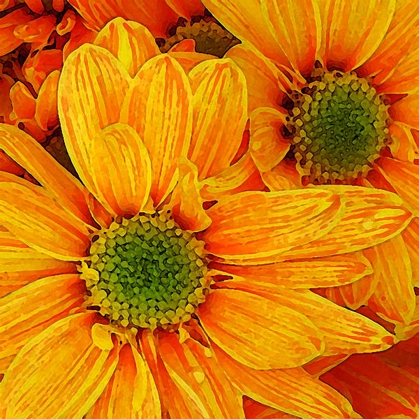 Orange Daisies Square Painting