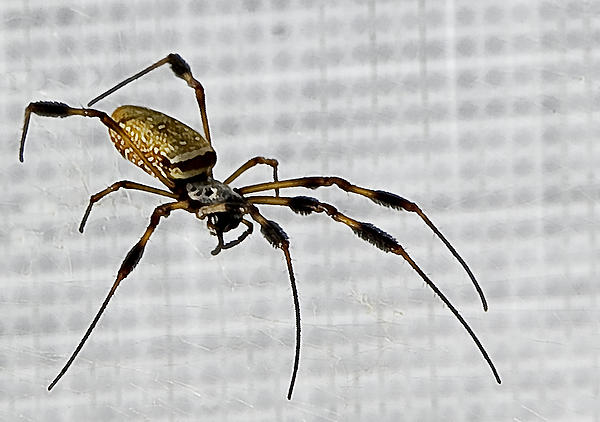 Orb Spider Photograph - Orb Spider 4 by Lynn Andrews