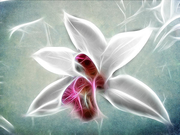 Ackground Photograph - Orchid Blues by Fiona Messenger