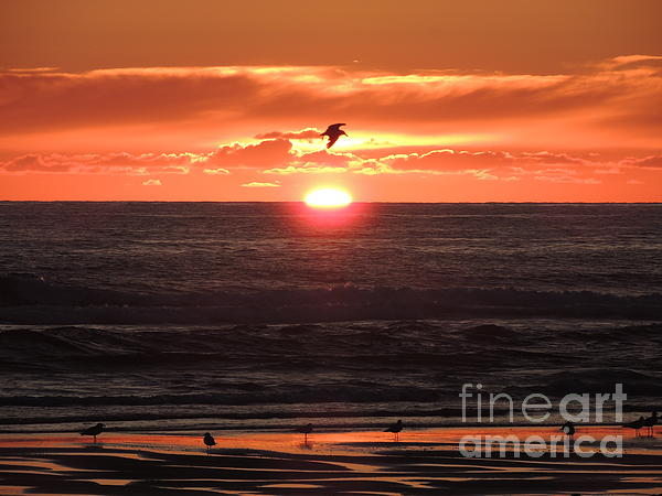 Photography Moments - Sandi - Pacific Sunset in all its Glory