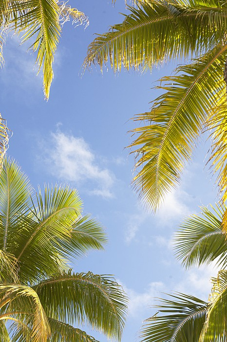 Blue Photograph - Palms And Sky by Brandon Tabiolo