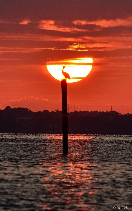 Pelican Photograph - Pelican Silhouette Sunrise On Sound by Jeff at JSJ Photography