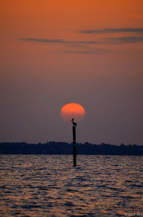 Pelican Photograph - Pelican Sunrise Silhouette On Sound by Jeff at JSJ Photography