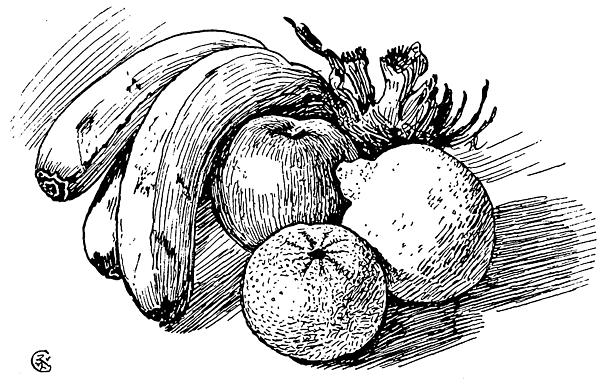 Contour Line Drawing Of Fruit : Contour line still life drawings for sale