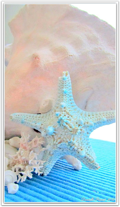 Beach Theme Home Decor Posters Photograph - Pink White And Blue Conch And Sea Shells  by Danielle  Parent