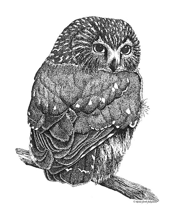Owl Drawing - Pointillism Sawhet Owl by Renee Forth-Fukumoto
