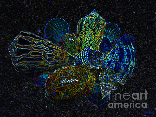 Positive Energy Seashells - Lucky Black Series Photograph  - Positive Energy Seashells - Lucky Black Series Fine Art Print
