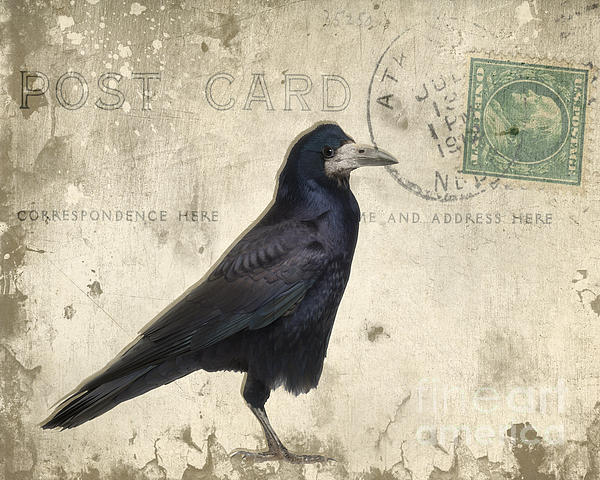 Raven Photograph - Post Card Nevermore by Edward Fielding