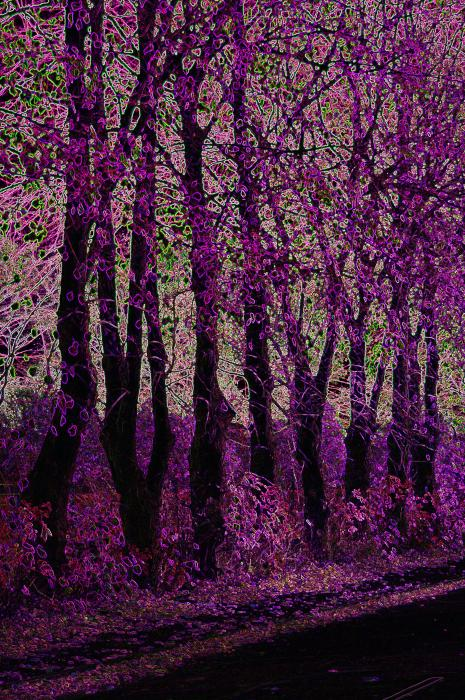 Purple Trees Digital Art