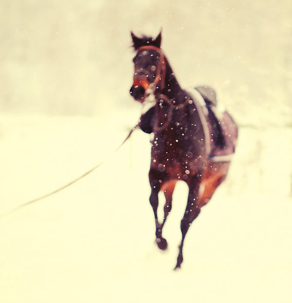Horse Photograph - Race In The Snow by Jenny Rainbow