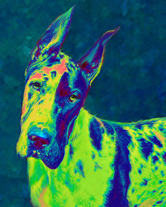 Rainbow Dane Digital Art  - Rainbow Dane Fine Art Print