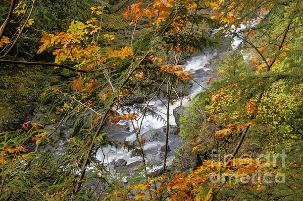 Rapids Through The Autumn Photograph  - Rapids Through The Autumn Fine Art Print