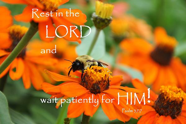 Flowers Photograph - Rest In The Lord by Barbara Stellwagen