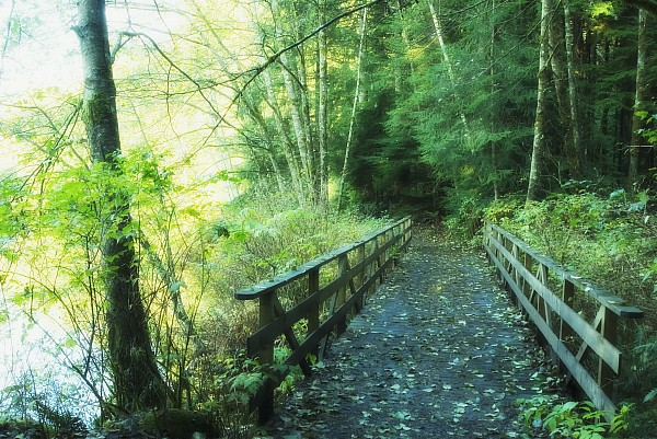 Bridge Photograph - Rice Lake In North Vancouver by Marlene Ford