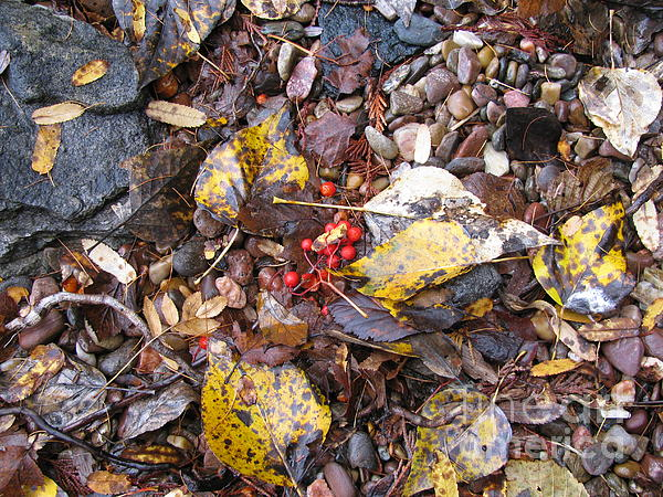 Rocks Photograph - Rocks And Berries by Leone Lund
