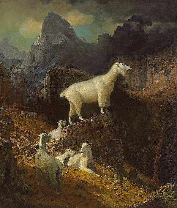 Landscape; Romantic; Romanticist; America; North America; American; North American;landscape; Rural; Countryside; Wilderness; Scenic; Picturesque; Atmospheric; Rocky Mountains; Rockies; Mountain; Mountains; Mountainous; Wildlife; Species; Mountain Goat; Mountain Goats; Goat; Goats; Wild; Rugged; Peaks; Dramatic; Animal; Animals; Wild Animal; Wild Animals Painting - Rocky Mountain Goats by Albert Bierstadt