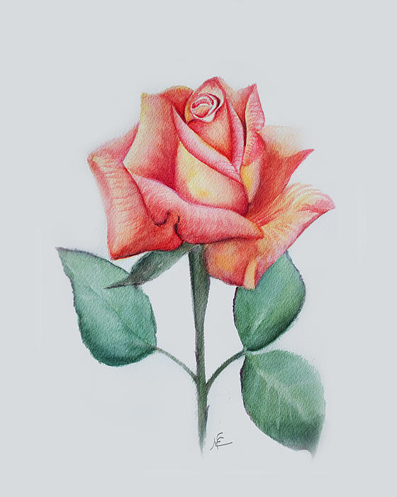 Flower Painting - Rose 4 by Nancy Edwards