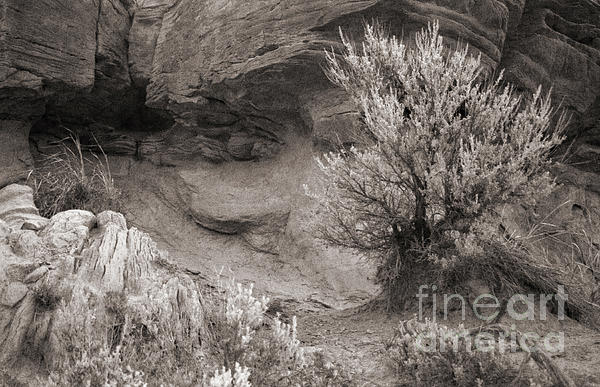 Sagebrush On Polecat Bench Photograph  - Sagebrush On Polecat Bench Fine Art Print