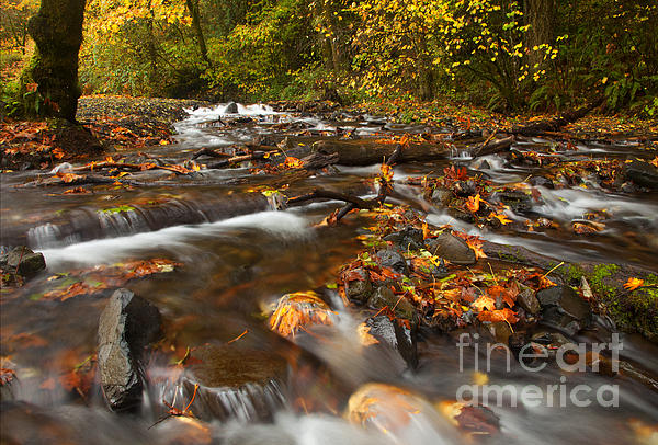 Wahkeena Creek Photograph - Scattered Leaves by Mike  Dawson