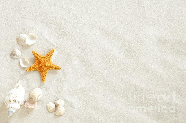Seashells Photograph - Seashells by Boon Mee