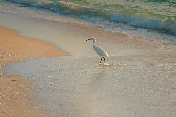 Bird Photograph - Snowy Egret In Surf II by Steven Ainsworth