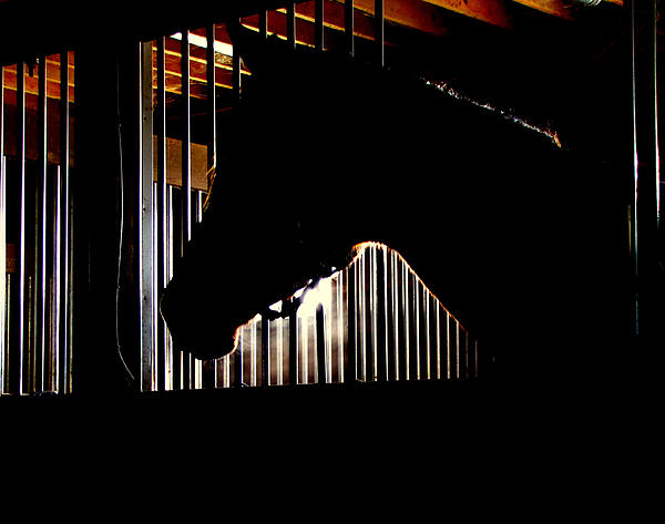 Horse Photograph - Sparkle Walked In To A Bar.... by Phil Cheevers
