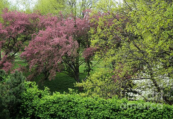 Spring In St. Louis Photograph  - Spring In St. Louis Fine Art Print