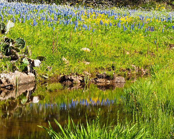 Blue Photograph - Spring Reflection by Thomas Pettengill