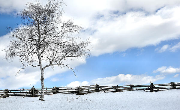 Tree Photograph - Standing Alone by Todd Hostetter