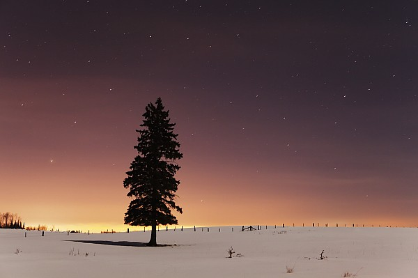 Canada Photograph - Stars In The Night Sky With Lone Tree by Susan Dykstra