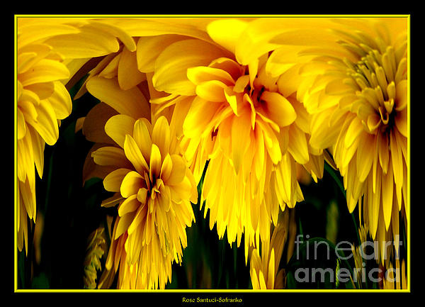 Sunflower Photograph - Sunflower Abstract 1 by Rose Santuci-Sofranko