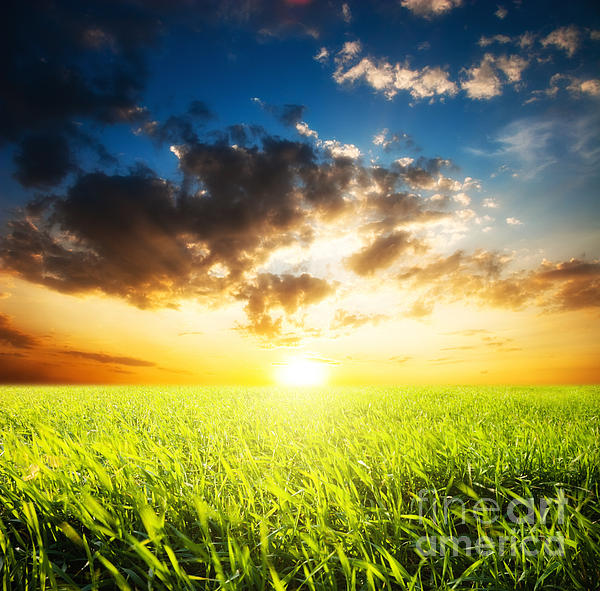 Sunset  Photograph - Sunset And Field Of Grass by Boon Mee
