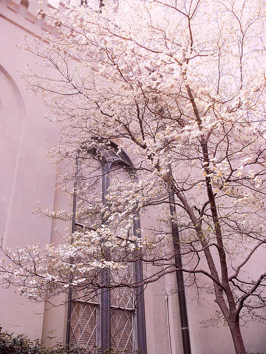 Nature Photography Photograph - Surreal Dreamy Church Window With Pink Trees by Kathy Fornal