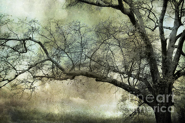 Surreal Nature Photos Photograph - Surreal Gothic Dreamy Trees Nature Landscape by Kathy Fornal