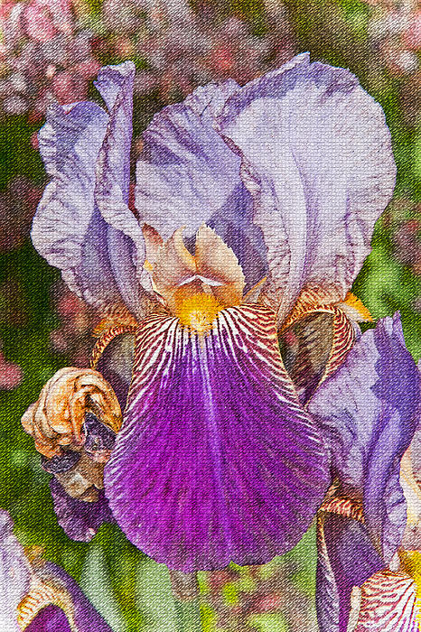 Textured purple bearded iris flower photograph by valerie garner - Valerie garnering ...