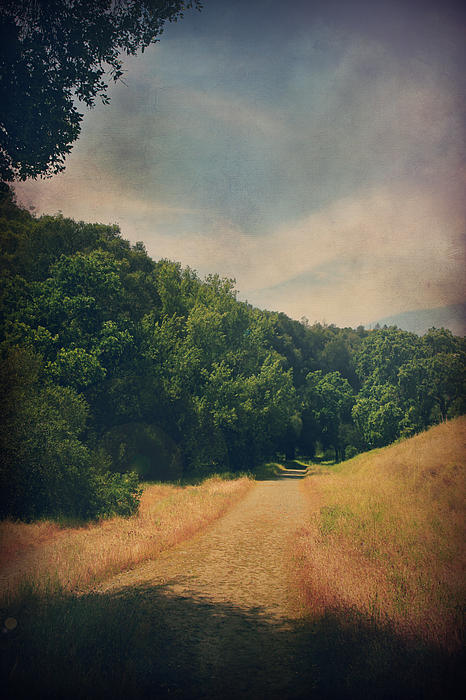 Sunol Regional Wilderness Photograph - The Adventure Begins by Laurie Search