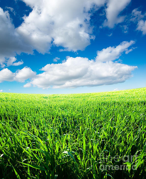 The Beautiful  Photograph - The Beautiful Greens Landscape by Boon Mee