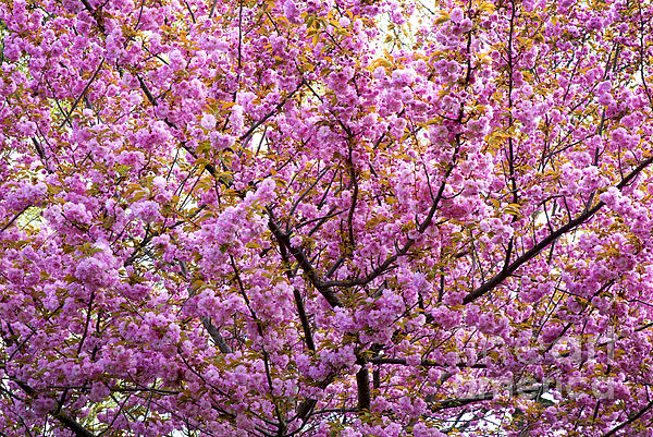Trees Photograph - The Color Purple 2 by Paul W Faust -  Impressions of Light
