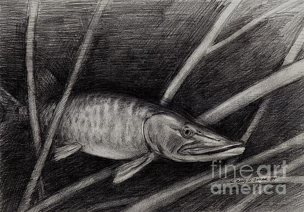 Fish Drawing - The Musky by Larry Green