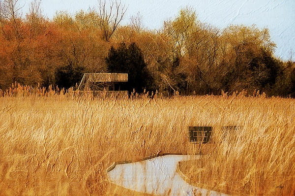 Marsh Photograph - The Overlook by Lois Bryan