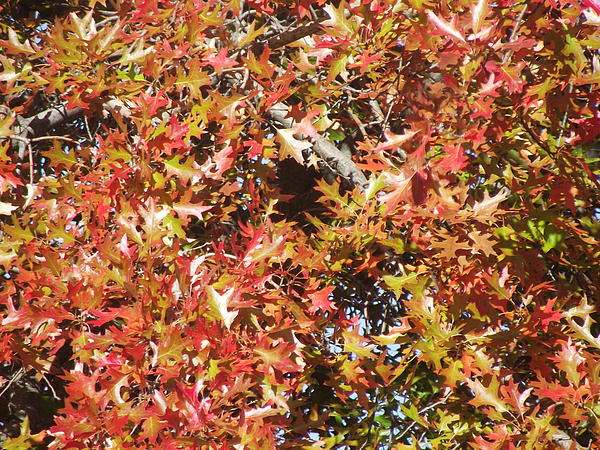 Autumn Photograph - The Rich Reds And Yellows Of Fall by James Rishel