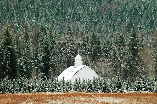 Landscape Photograph - The White Barn by Annie Pflueger