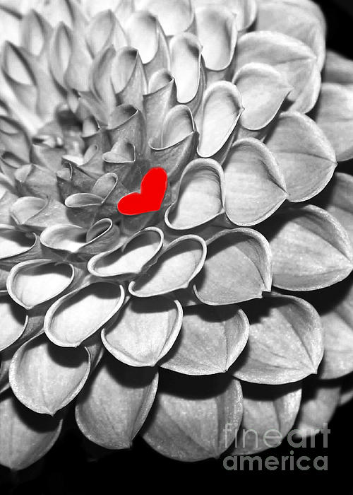 Macro Photograph - This Heart Is For You by Sabrina L Ryan