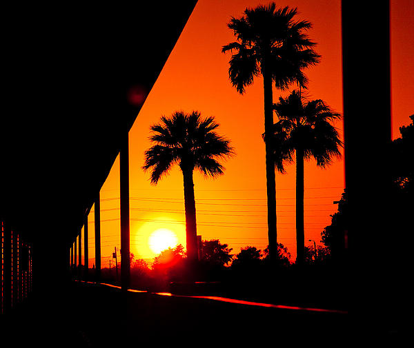 Bedros Awak - Three Palms In Sunset