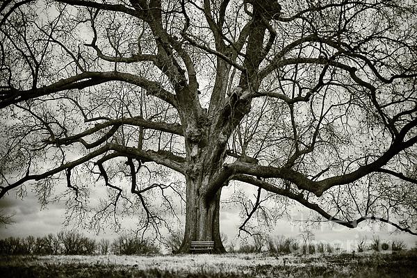 Tree Photograph - Tree With Bench by Greg Ahrens