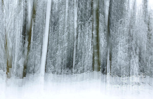 Trees And Snow Abstract Photograph  - Trees And Snow Abstract Fine Art Print