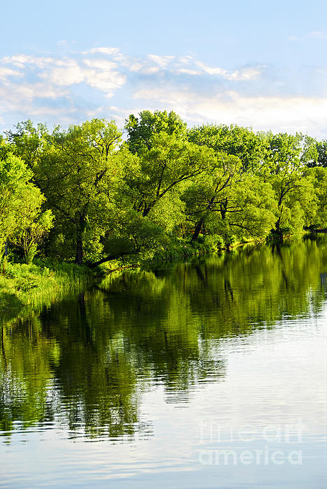Trees Photograph - Trees Reflecting In River by Elena Elisseeva