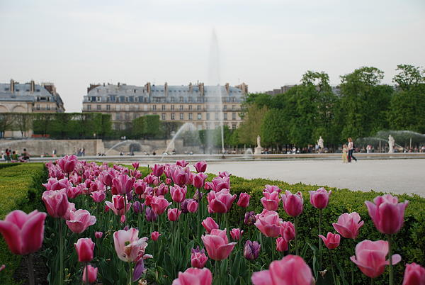 Jennifer Lyon - Tuileries Garden in Bloom